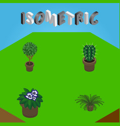 Isometric plant set of tree peyote plant and vector