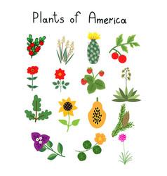 Plants of america vector