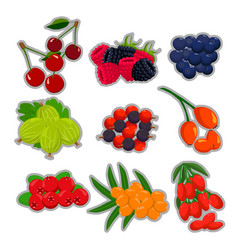 the theme berries vector image