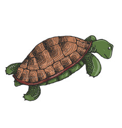 Cute green waving turtle vector