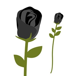 Black rose dark scary flower rose petals with vector