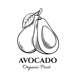 Hand drawn avocado icon vector