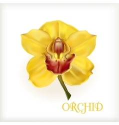 Yellow orchid with stem vector