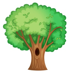 Tree object vector image