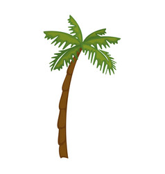 Isolated beach palm vector