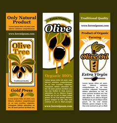 banners for olives and olive oil product vector image