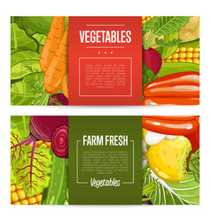 fresh farm food banners with vegetable vector image