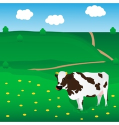 Cow grazes on the meadow vector