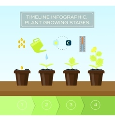Plant growing set and infographic with icon head vector