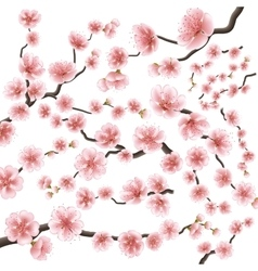 Set of sakura japan cherry branch EPS 10 vector image vector image