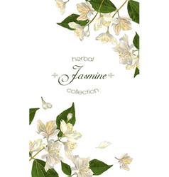Jasmine flowers banner vector image vector image