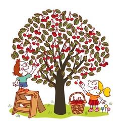 Picking cherries vector