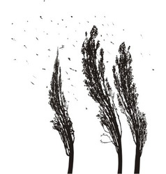 Poplars in the wind vector image