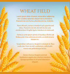 Wheat field concept with space for text vector