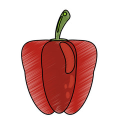 Drawing pepper nutrition food vector