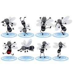 Mosquitos in different actions vector image vector image