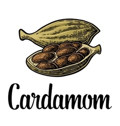 Cardamom spice with seed black vintage vector image