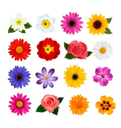 Big collection of colorful flowers vector