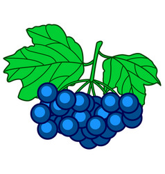 dark blue berry vector image vector image