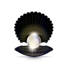 dark shell and white pearl vector image