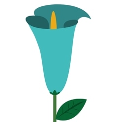 Calla lilly flower icon vector
