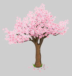 Beautiful tree cherry blossoms gentle sakura vector