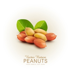 Peanut kernels isolated with green leaves vector