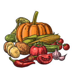 poster with set vegetables cucumbers garlic vector image