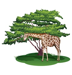 A giraffe under the tree vector image vector image