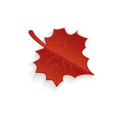 cartoon autumn fallen maple leaf isolated vector image vector image
