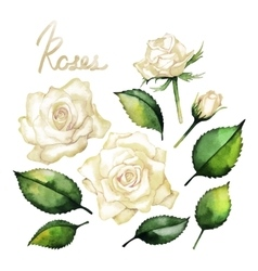 Watercolor roses collection vector