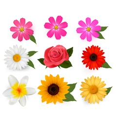 Flower icons vector