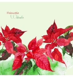 Background with red poinsettia vector image