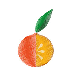 Fresh fruit drawing icon vector