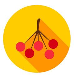 Rowan circle icon vector