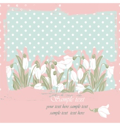 Snowdrop flowers blossom spring card vector