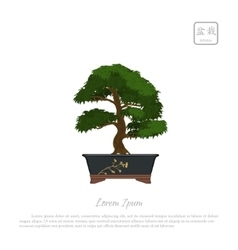 Bonsai tree in pot on white background vector image