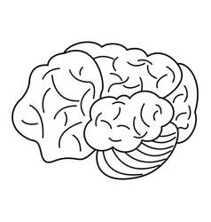 Brain organ human outline vector