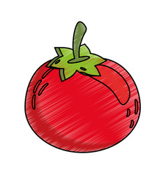 Drawing tomato food nutrition vector