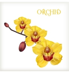 yellow orchid set vector image vector image