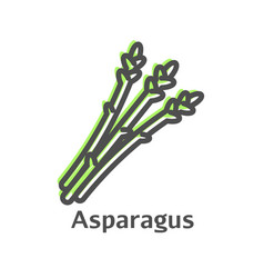 asparagus thin line icon asparagus simple organic vector image