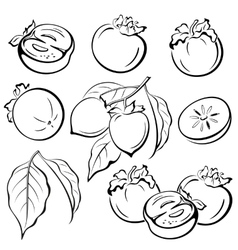 Persimmon Fruits and Leaves Pictograms vector image vector image