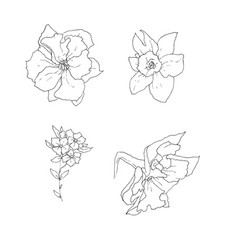 stock line botanic flowers vector image vector image