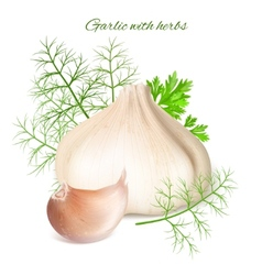 Garlic with herbs vector
