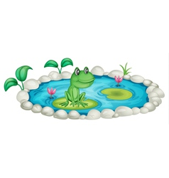 Frog in a pond vector
