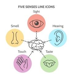 Five senses line icons vector