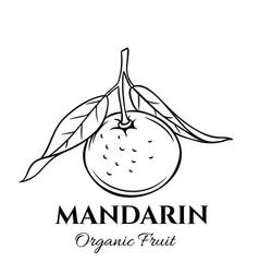 Hand drawn mandarin icon vector
