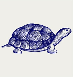 Ear tortoise vector