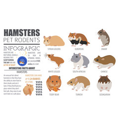 Hamster breeds icon set flat style isolated on vector