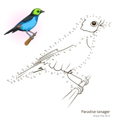 Paradise tanager bird learn to draw vector